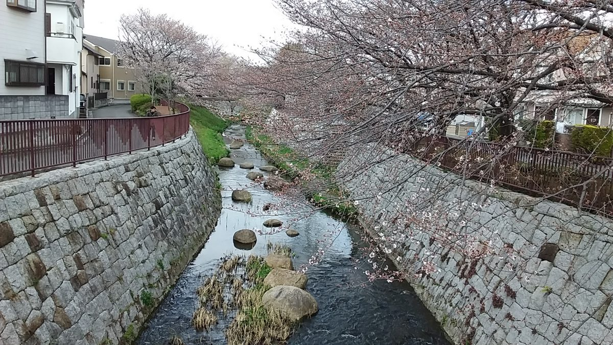 多摩川梨にも春の訪れ