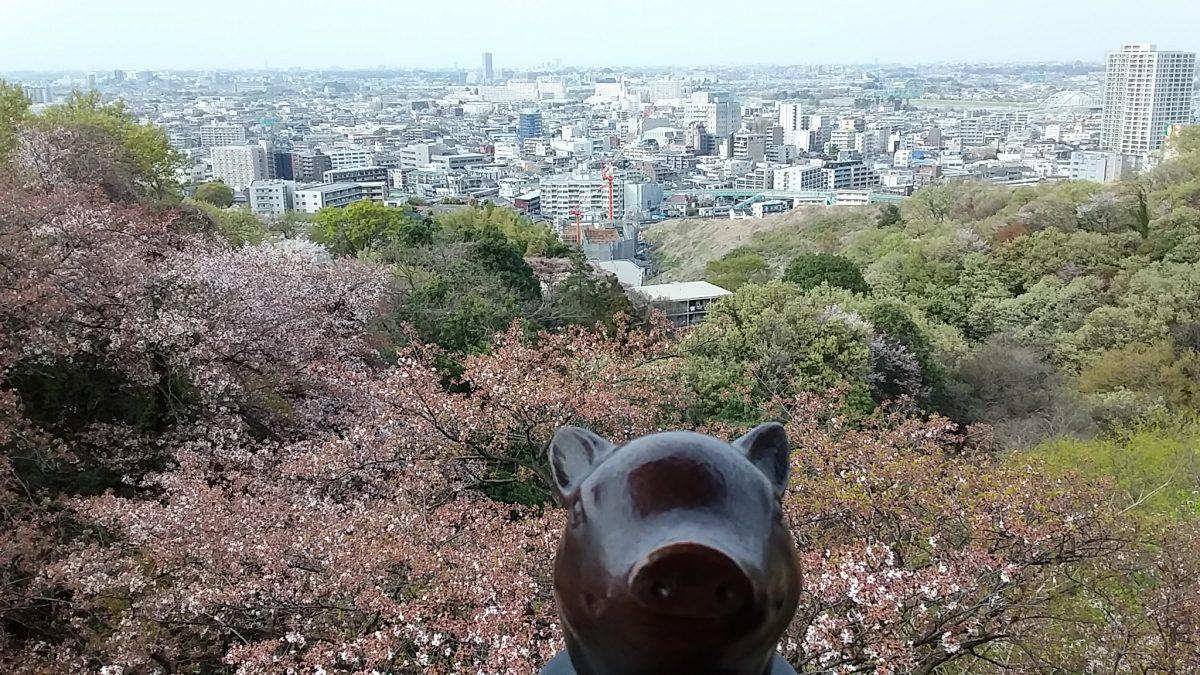 桜の枡形山展望台 リターンズ