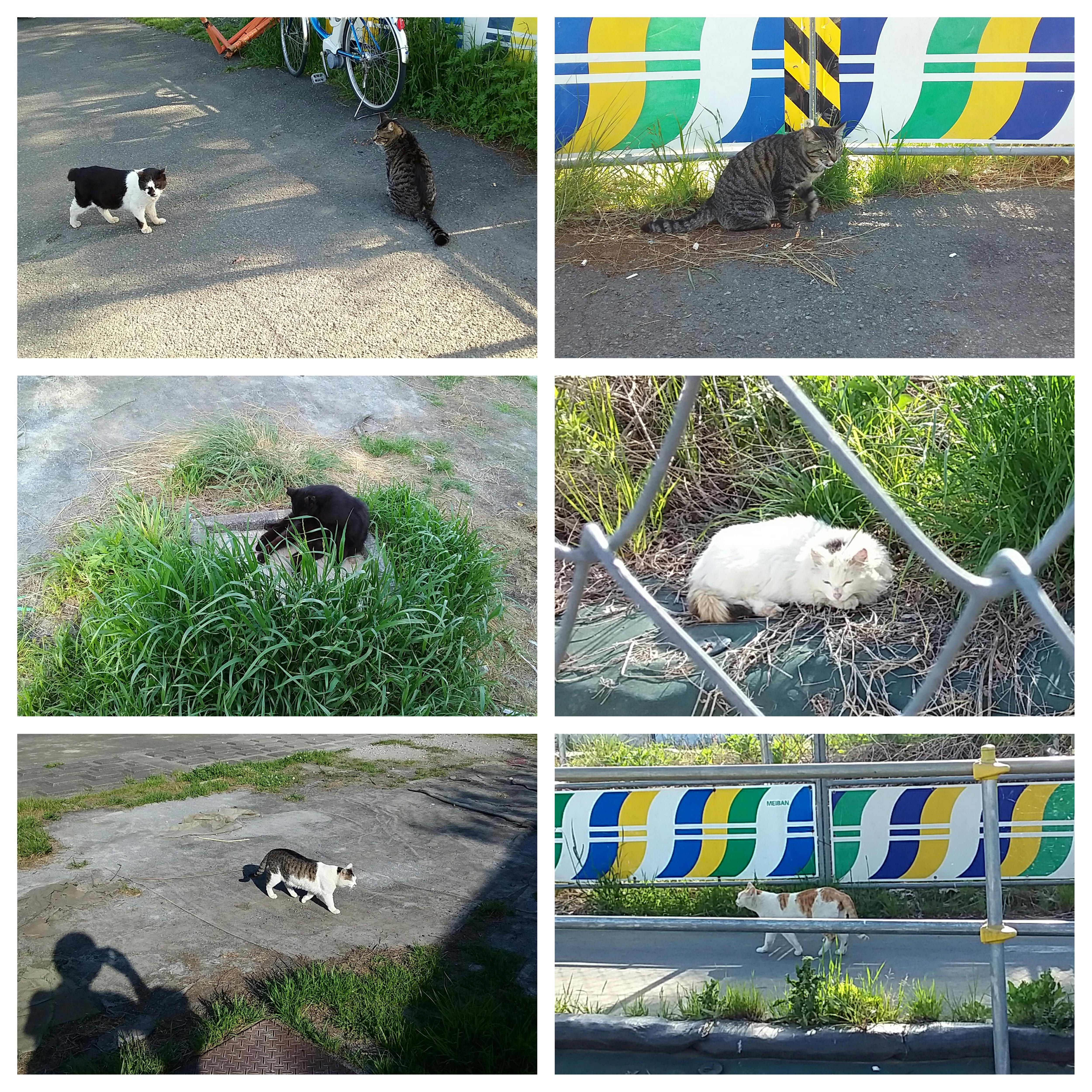 多摩川の河川敷で見かけたネコちゃんです